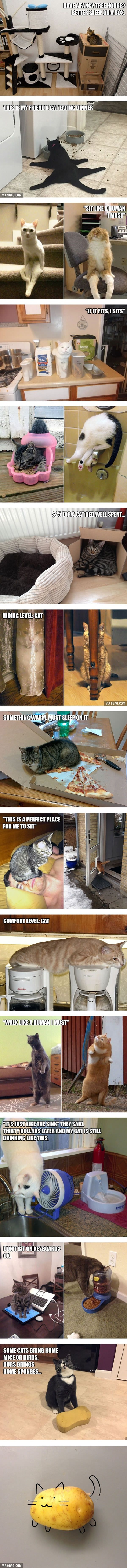 20 Funny Examples of Cat Logic - 9GAG by diane.smith